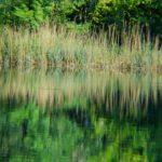 canneti zone pregiate del lago