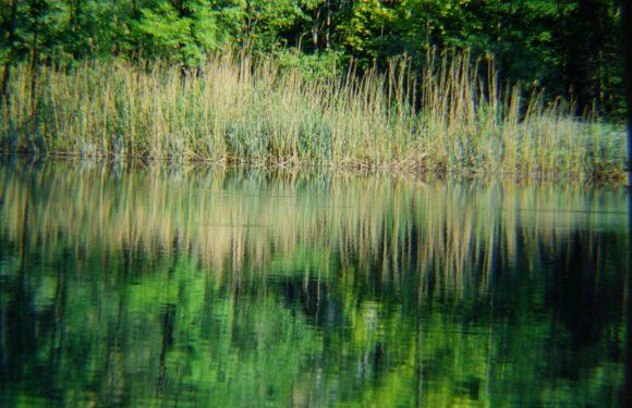 canneti del lago di garda