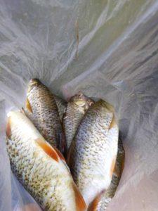 tinca e gardon pesci del lago