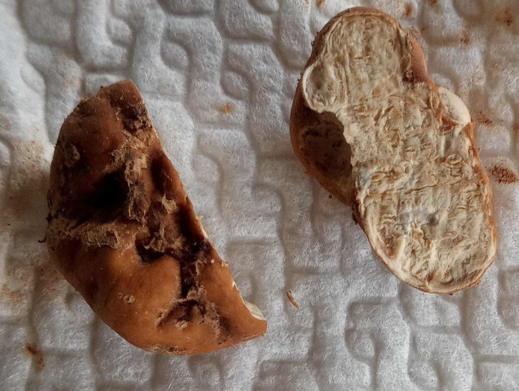 Choiromyces meandriformis  detto tartufo dei maiali