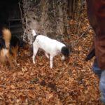 ricerca del tartufo con il cane