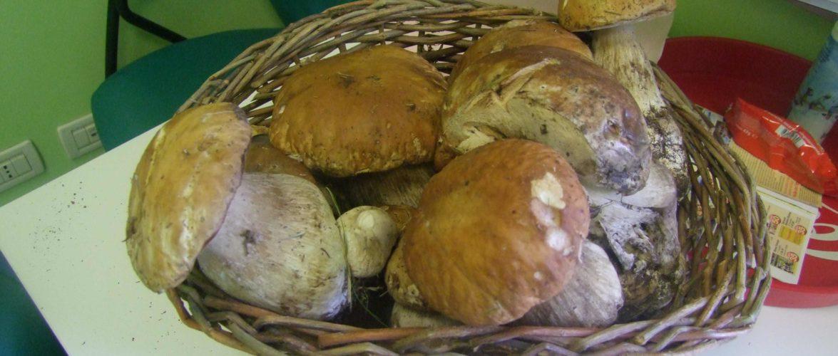 i funghi del lago di Garda