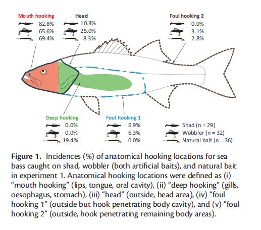 sedi di aggancio del pesce nello studio effettuato