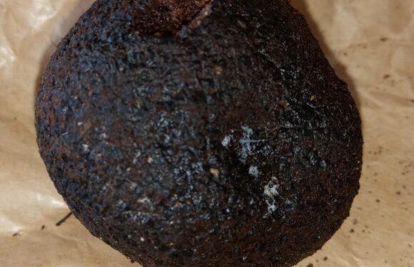 tuber macrosporum tartufo nero liscio