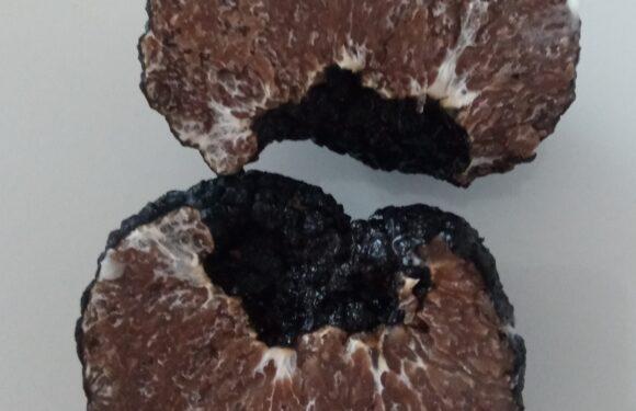 tuber mesentericum