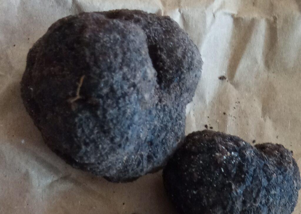 tartufo nero di Bagnoli