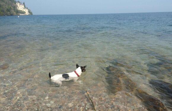 SPIAGGE PER CANI DOG BEACH LAGO DI GARDA